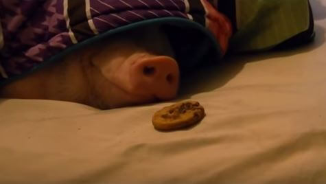 豚アイキャッチ2 (1)