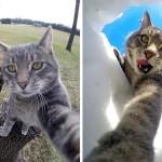【ハイチーズ、ニャン♪】犬の友達と一緒!自撮りにどっぷりハマった猫12選