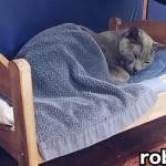 今すぐ買ってくる!IKEAのドールベッドで眠るニャンコに胸キュン