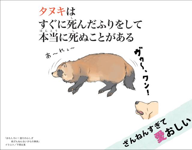 タヌキの画像 p1_9