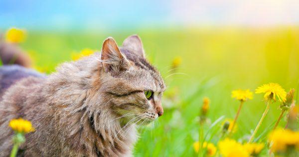 世界中のにゃんこが大集合!猫がスクリーンの中で大暴れする映画10作品