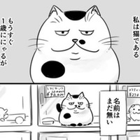おじさまと猫