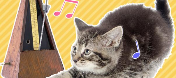 メトロノームでビート刻む猫の可愛さが異常