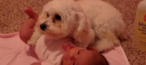 強敵から体を張って赤ちゃんを守る勇敢な子犬がカッコイイ
