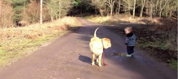 【仲良しな二人】散歩中、男の子が水たまりで遊ぶのをそっと見守る犬