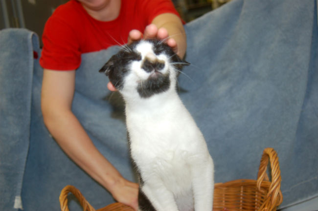 30-hysterically-hip-cats-with-mustaches-11