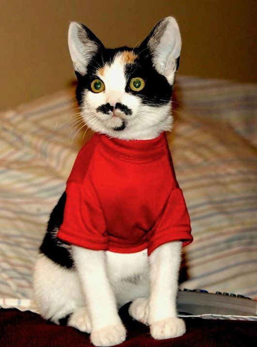 30-hysterically-hip-cats-with-mustaches-2