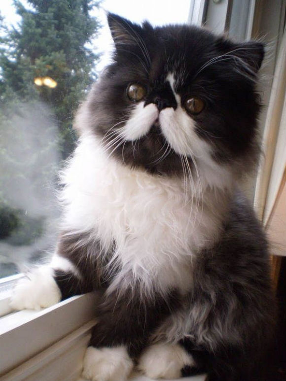30-hysterically-hip-cats-with-mustaches-21