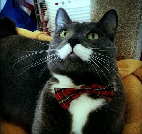30-hysterically-hip-cats-with-mustaches-22