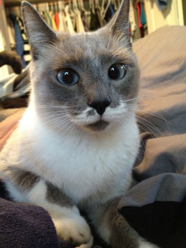 30-hysterically-hip-cats-with-mustaches-23
