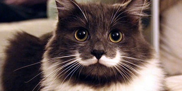 30-hysterically-hip-cats-with-mustaches-28
