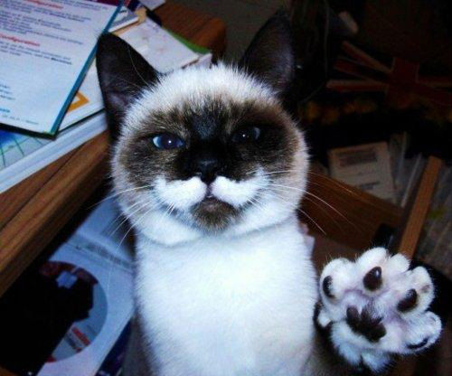 30-hysterically-hip-cats-with-mustaches-3