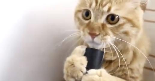 吸引力がたまらにゃい!掃除機に病みつきの猫