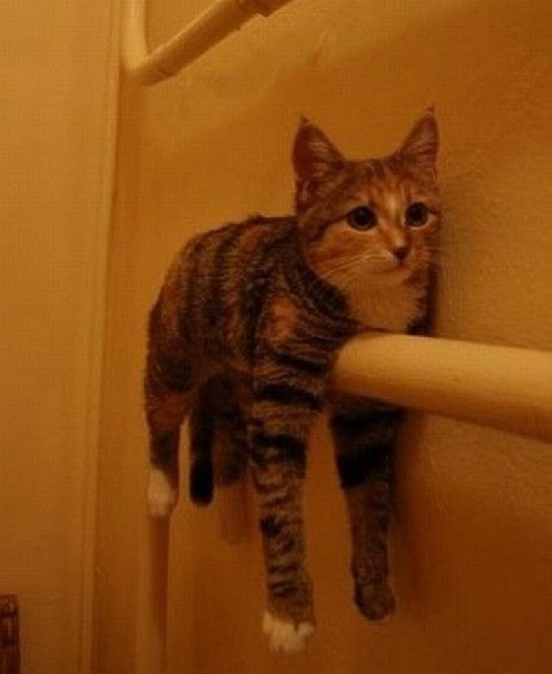 挟まった猫