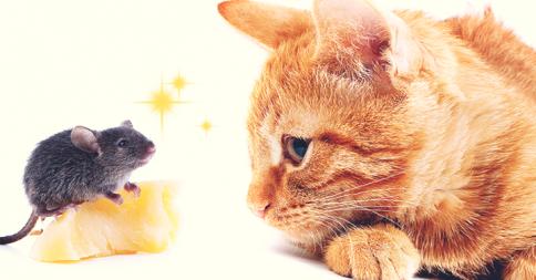 【リアル版トム&ジェリー】負けてばっかいられない、猫に立ち向かうネズミ