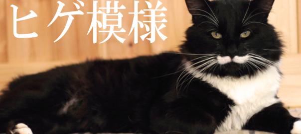 【紳士な猫】口ヒゲを生やした猫達がどう見てもジェントルマン18選