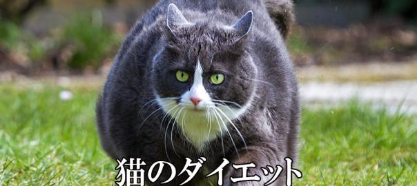 猫のためのダイエットプログラムが秀逸