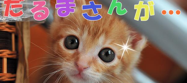 【人 VS 猫】猫とだるまさん転んだをやってみたら予想以上にノリノリだった