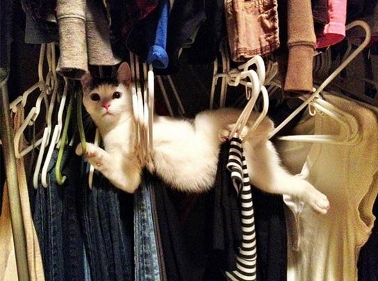 ハンガーに挟まった猫