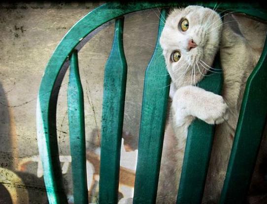 椅子に挟まった猫