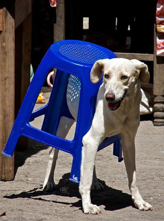 椅子に挟まった犬