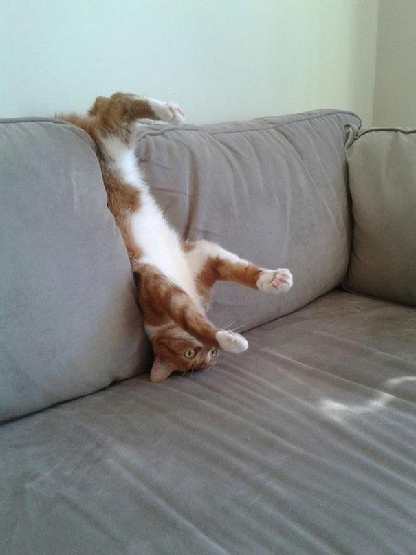 ソファに挟まった猫