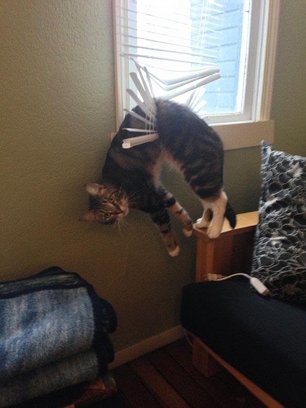 ブラインドに挟まった猫