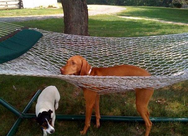 網にはまった犬