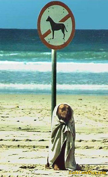 funny-no-dogs-sign_fullsize