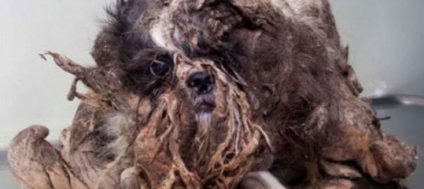 【衝撃】「ゴミ」と呼ばれた世界一汚い犬のビフォーアフター(画像)