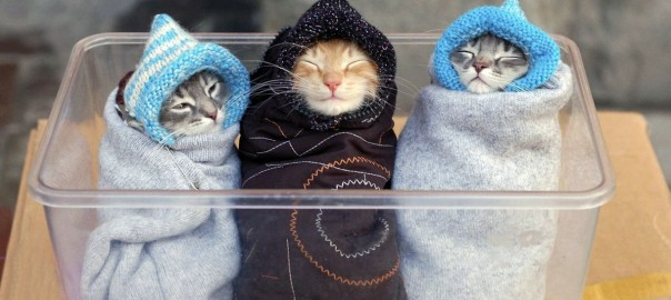 wrapped-up-kittens_85534
