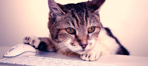 【人間とシェアハウスしてます】意識の高い猫の発言10選