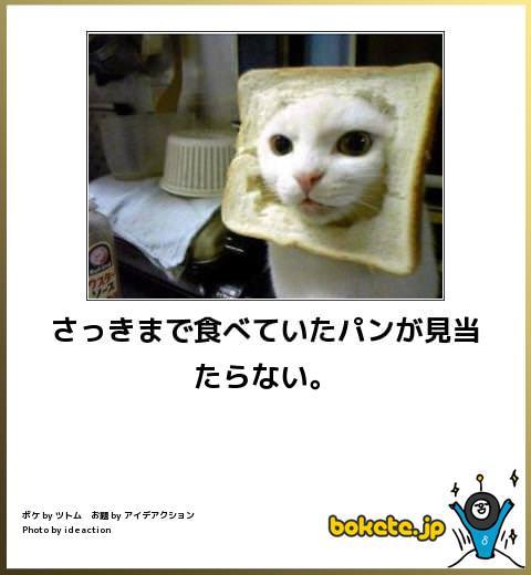 猫の画像大喜利