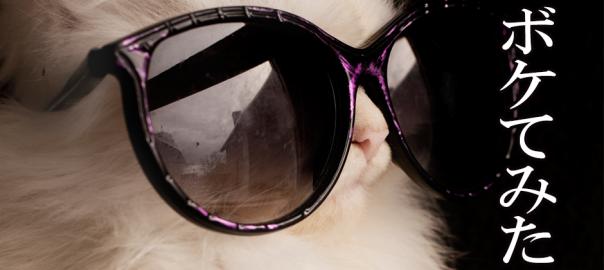 【画像で大喜利】猫の写真でボケてみた12選