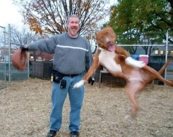 飛び込んでくる犬