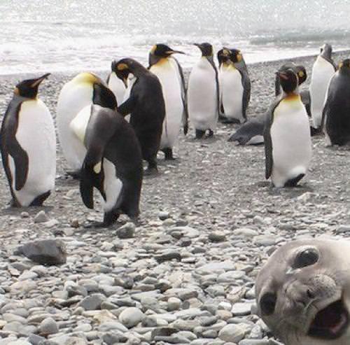 ペンギンたちとアザラシ