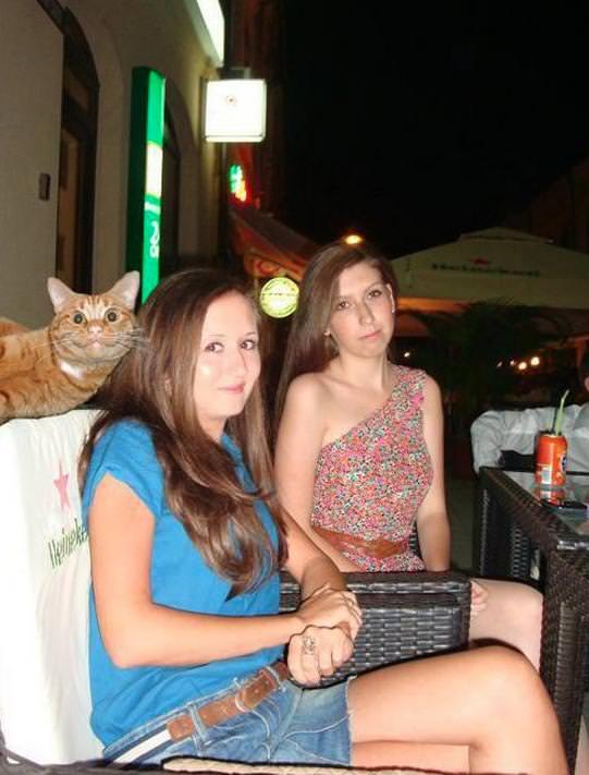 女性たちと猫の写真
