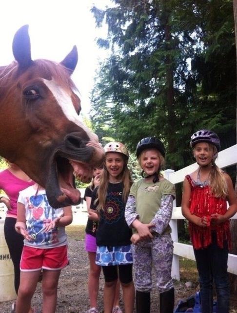 子供達と馬の写真