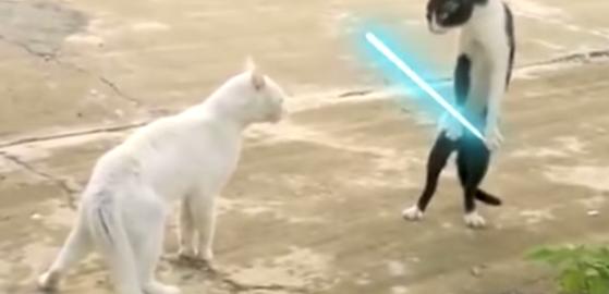 猫の喧嘩にライトセーバーを足すとどうなるの?→迫力が上がります。