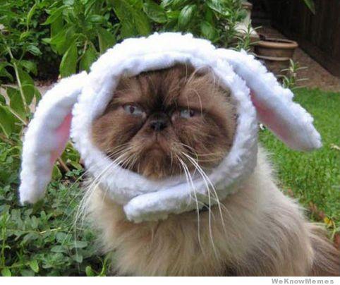 bunny-costume-cat