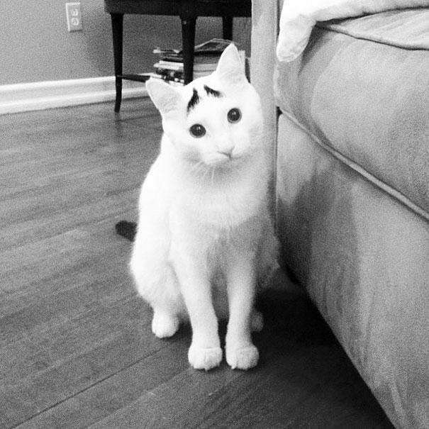 cat-markings-1-2