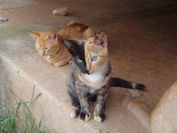 cat-markings-10