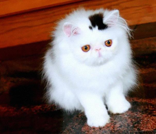 cat-markings-2