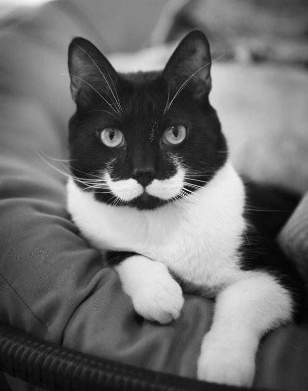 cat-markings-3