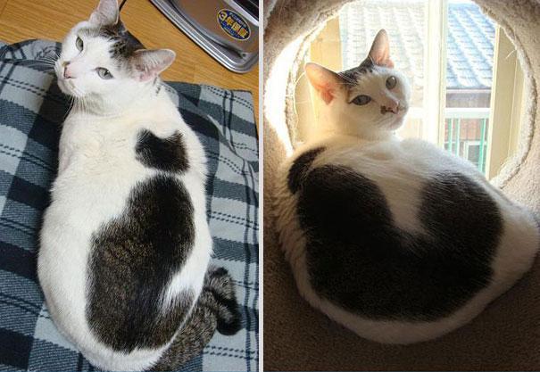 cat-markings-4-1(1)