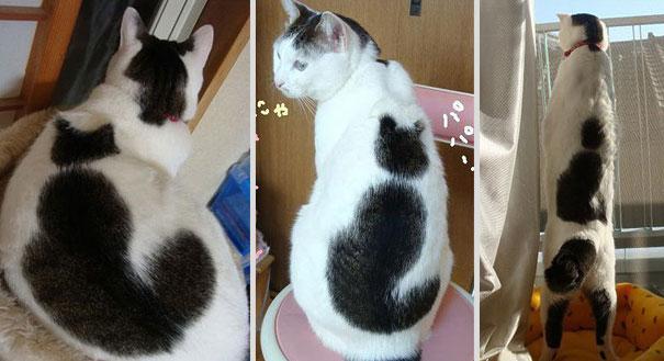 cat-markings-4-2(2)