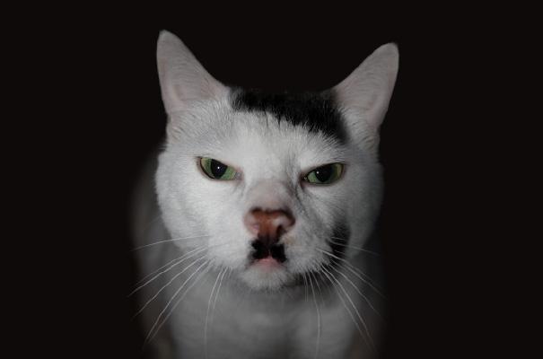 cat-markings-5