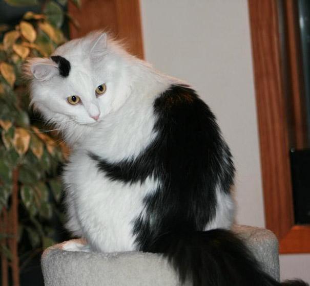 cat-markings-7