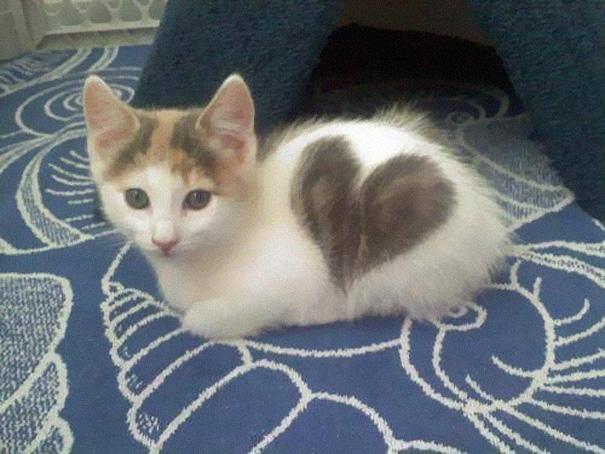 cat-markings-8