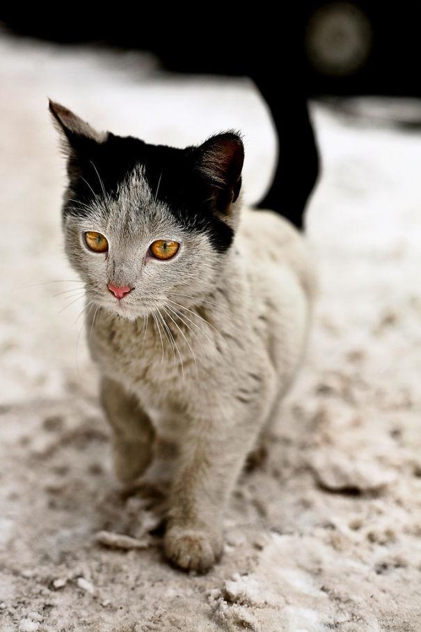 cat-markings-9